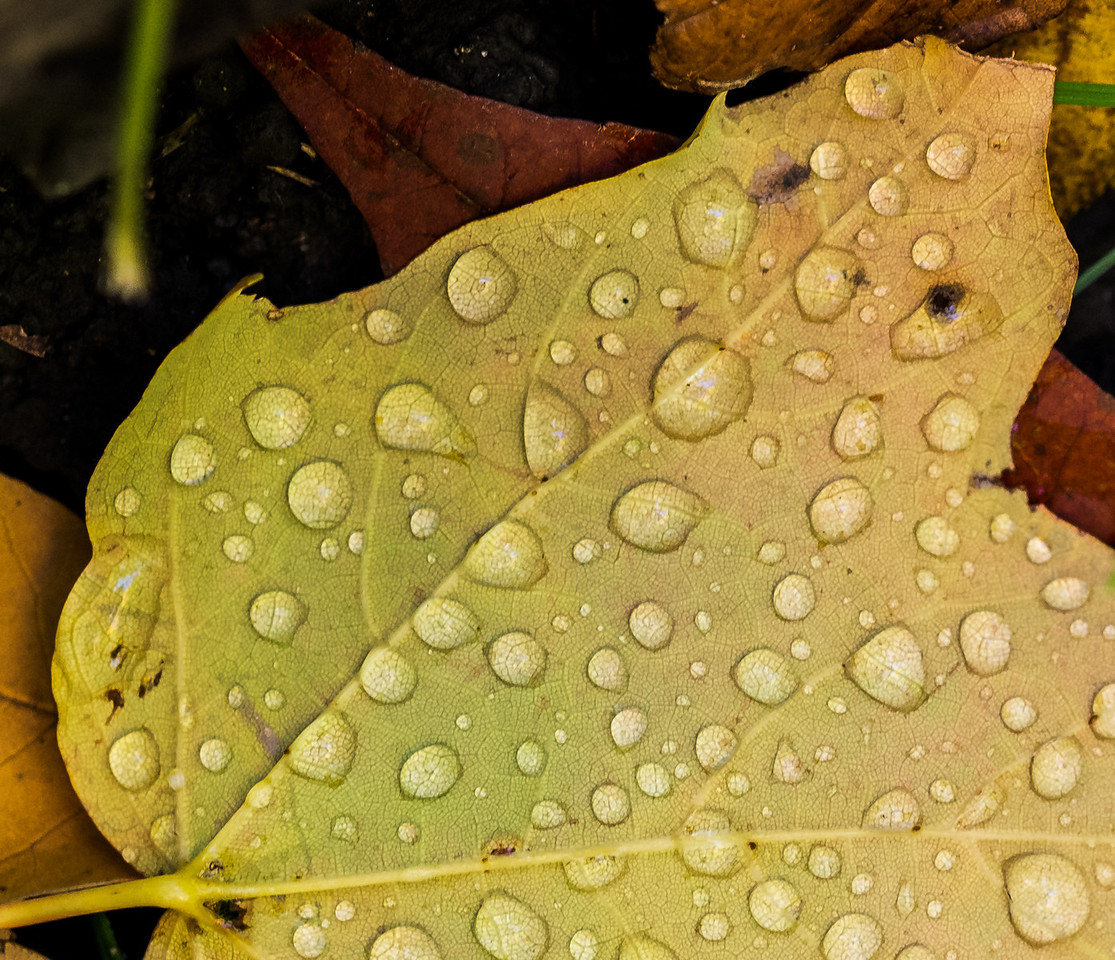 2012-10-12 - Thornhill Woods Park - 33