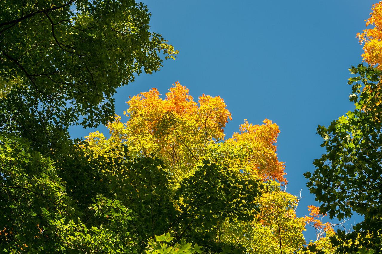 2012-10-12 - Thornhill Woods Park - 37