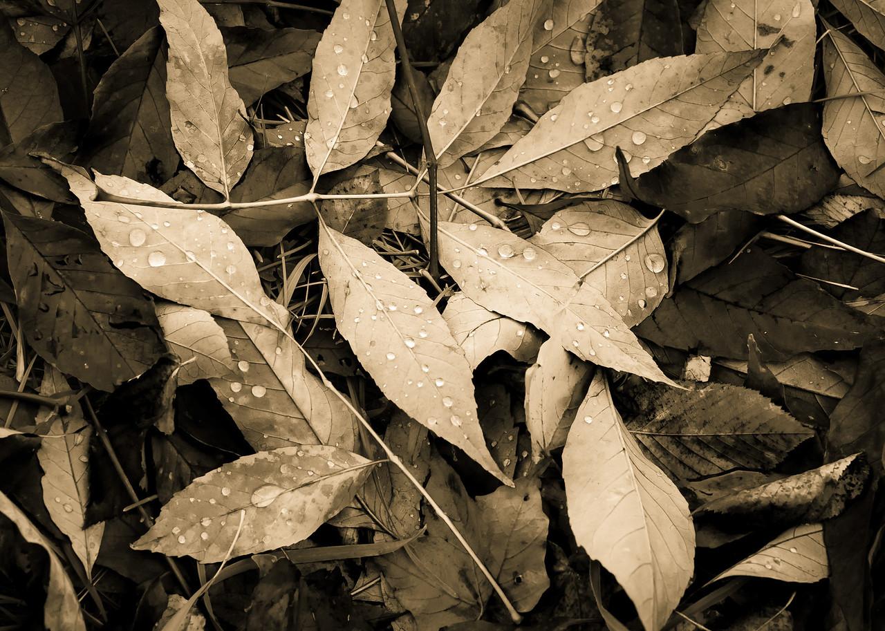 2012-10-17_Sagecrest_Pond_21