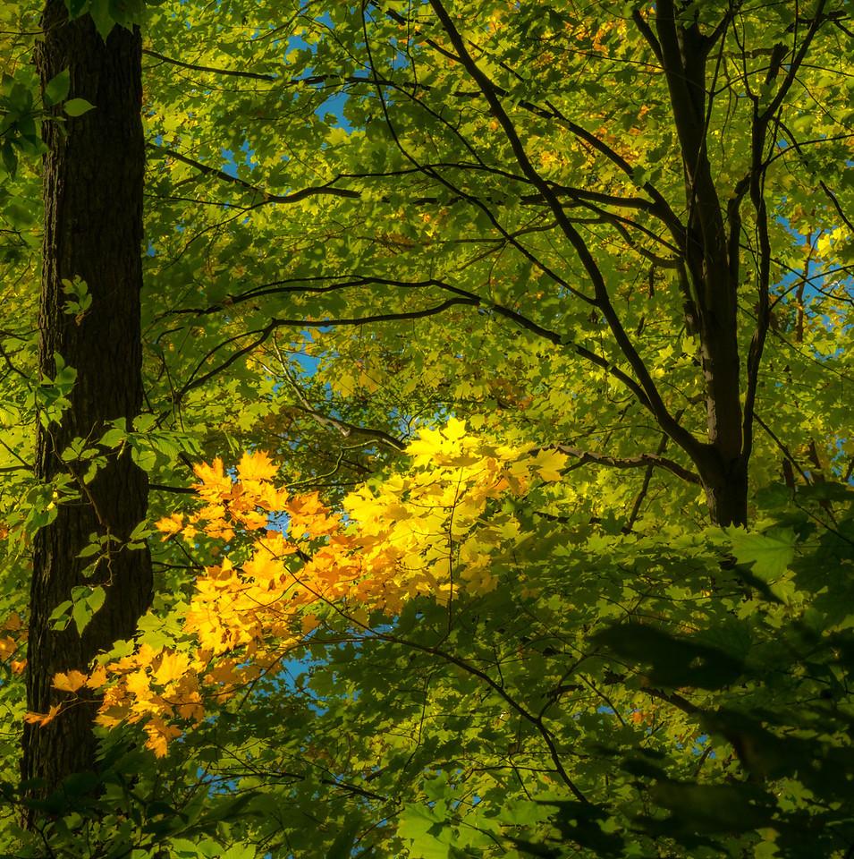 2012-10-12 - Thornhill Woods Park - 51