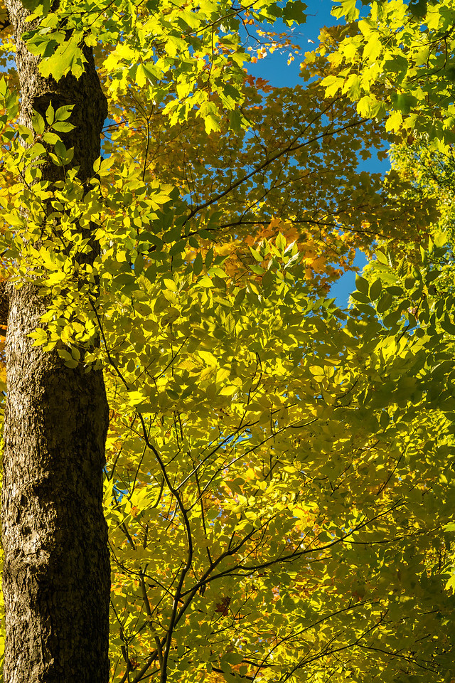 2012-10-12 - Thornhill Woods Park - 41