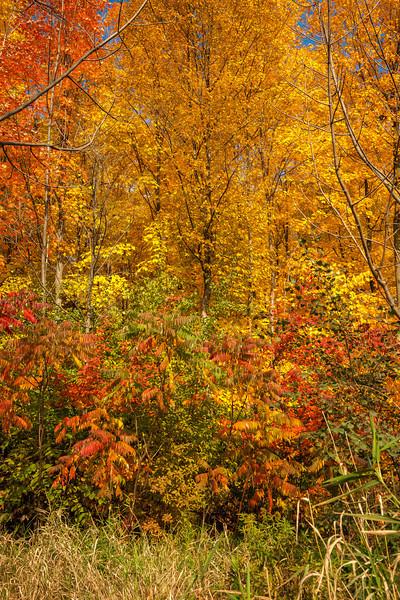 2012-10-18_Sagecrest_Pond_07