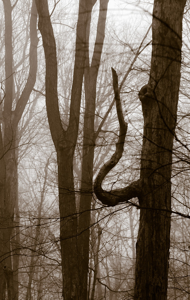 2012-11-20_Thornhill Woods_07