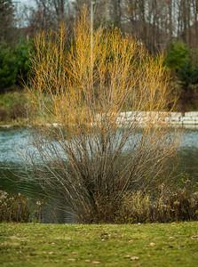 2012-11-11_Sagecrest_Pond_36