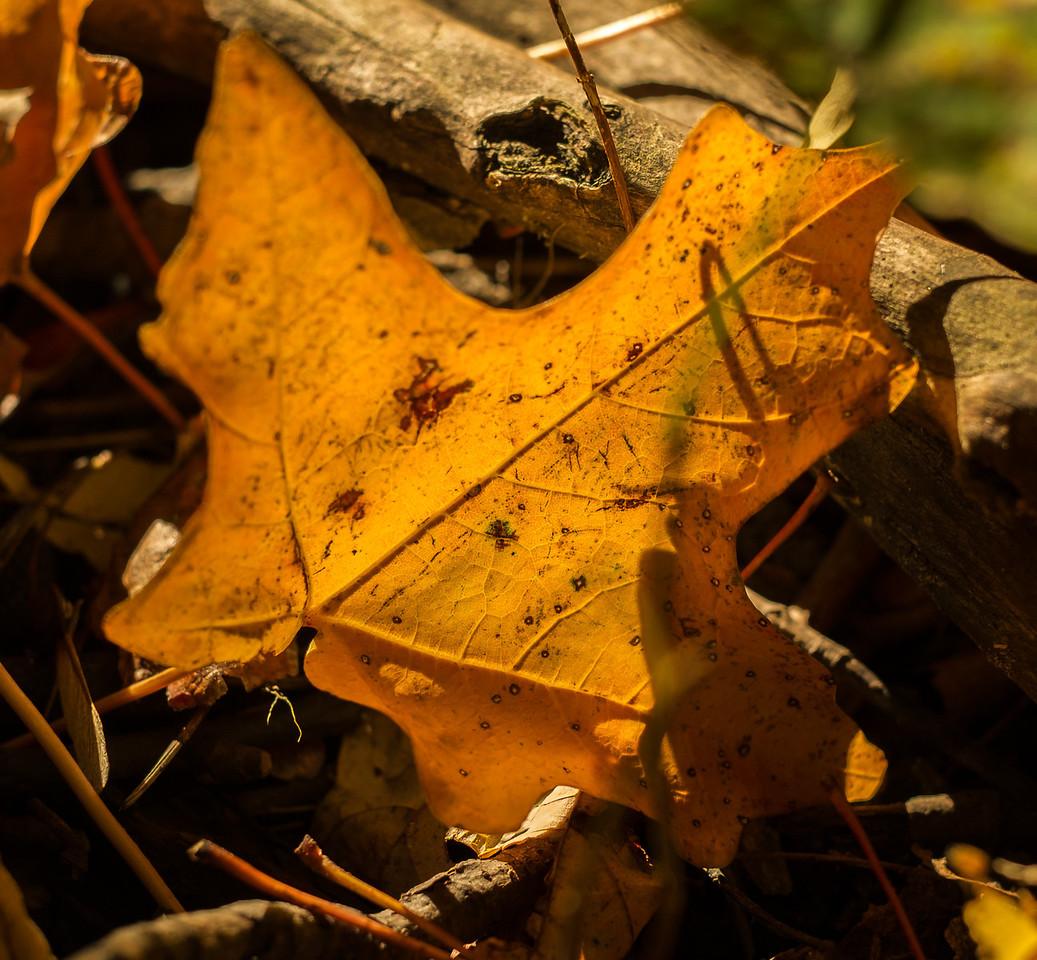 2012-10-12 - Thornhill Woods Park - 10