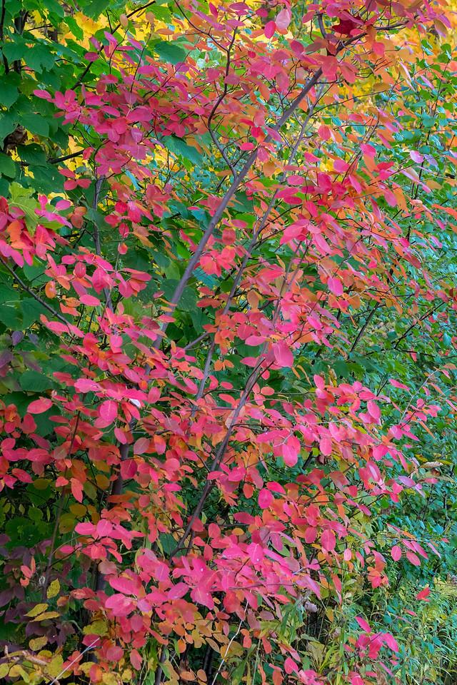 2012-10-17_Sagecrest_Pond_23