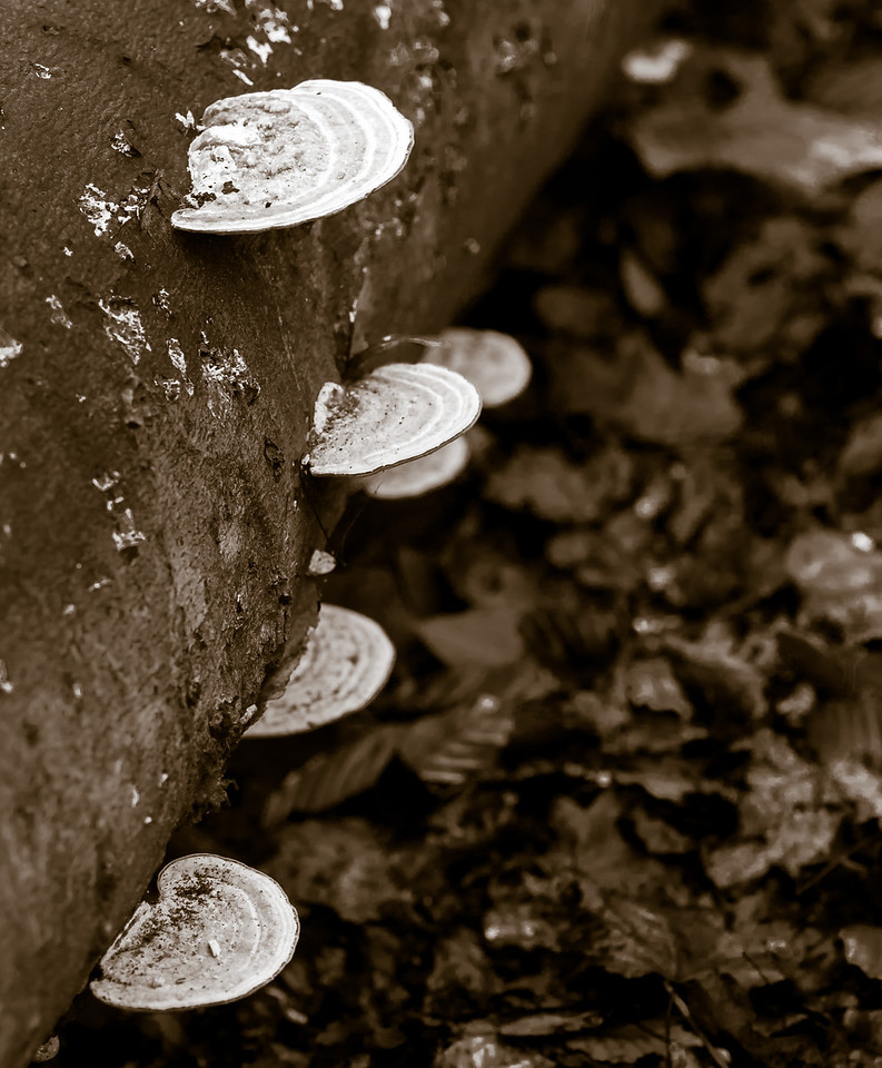 2012-11-20_Thornhill Woods_12