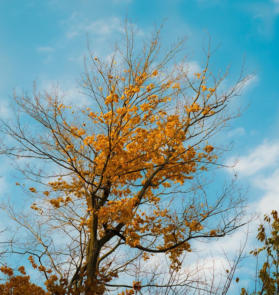 2012-10-17_Sagecrest_Pond_15