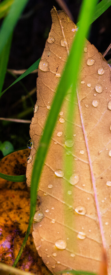 2012-10-12 - Thornhill Woods Park - 31
