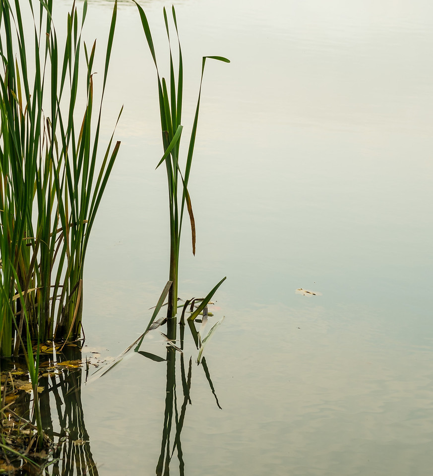2012-10-17_Sagecrest_Pond_24