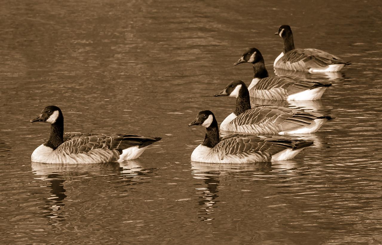 2012-11-11_Sagecrest_Pond_03