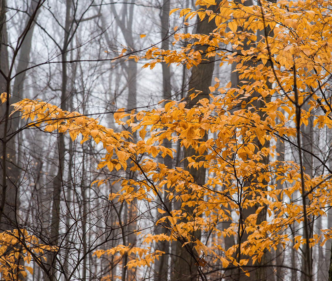 2012-11-20_Thornhill Woods_08