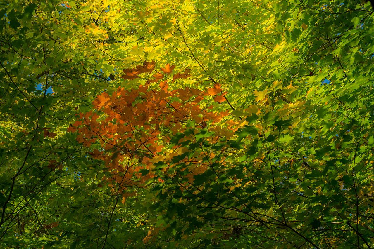 2012-10-12 - Thornhill Woods Park - 55