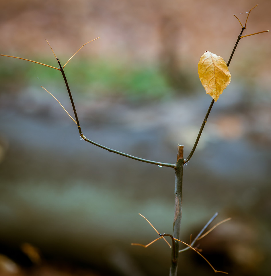 2012-11-20_Thornhill Woods_05