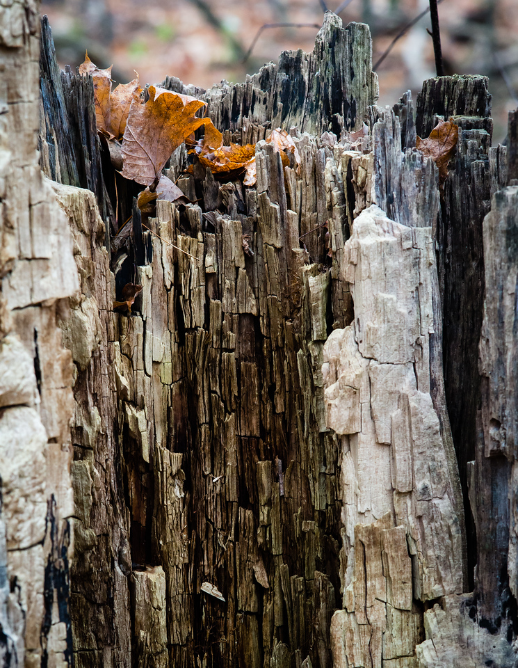 2012-11-20_Thornhill Woods_14