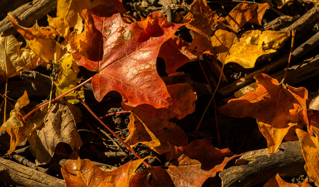 2012-10-12 - Thornhill Woods Park - 09