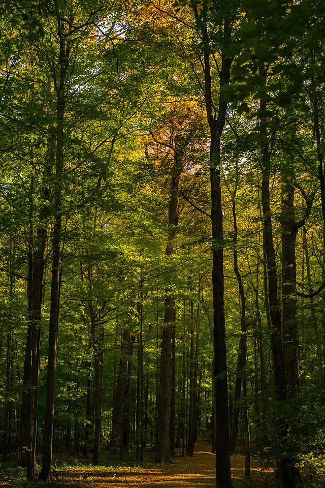 2012-10-12 - Thornhill Woods Park - 04