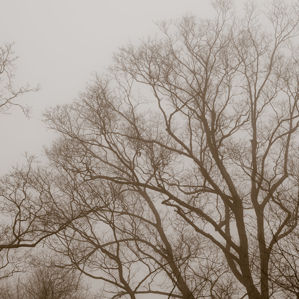 2012-11-20_Thornhill Woods_01