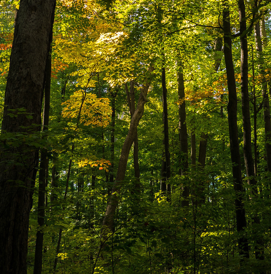 2012-10-12 - Thornhill Woods Park - 07