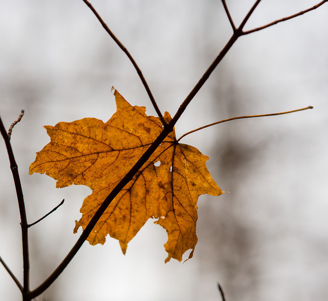 2012-11-20_Thornhill Woods_19