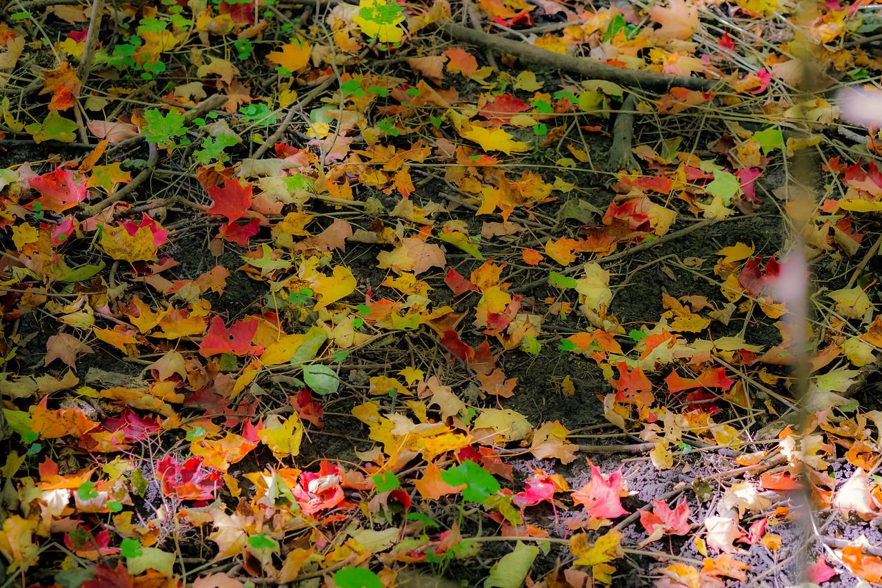 2012-10-12 - Thornhill Woods Park - 62