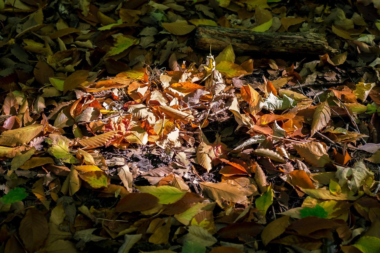 2012-10-12 - Thornhill Woods Park - 21