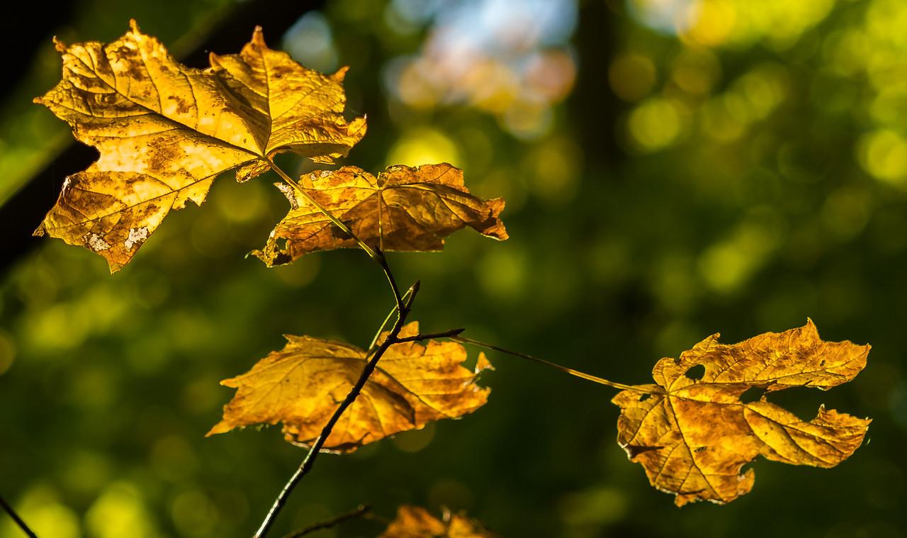 2012-10-12 - Thornhill Woods Park - 26