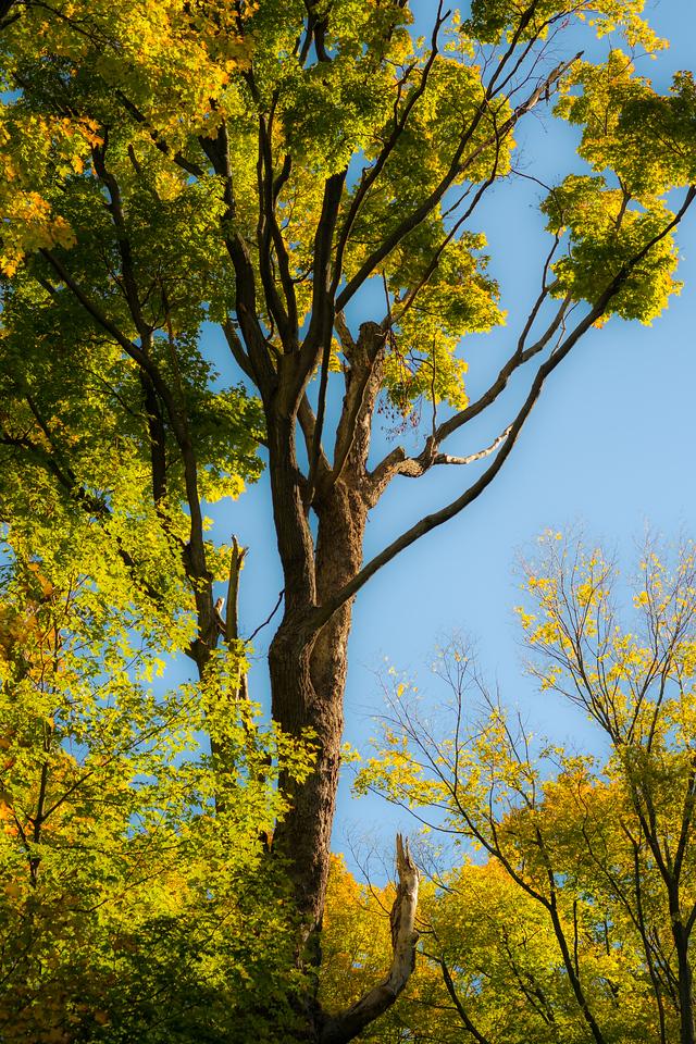 2012-10-12 - Thornhill Woods Park - 64