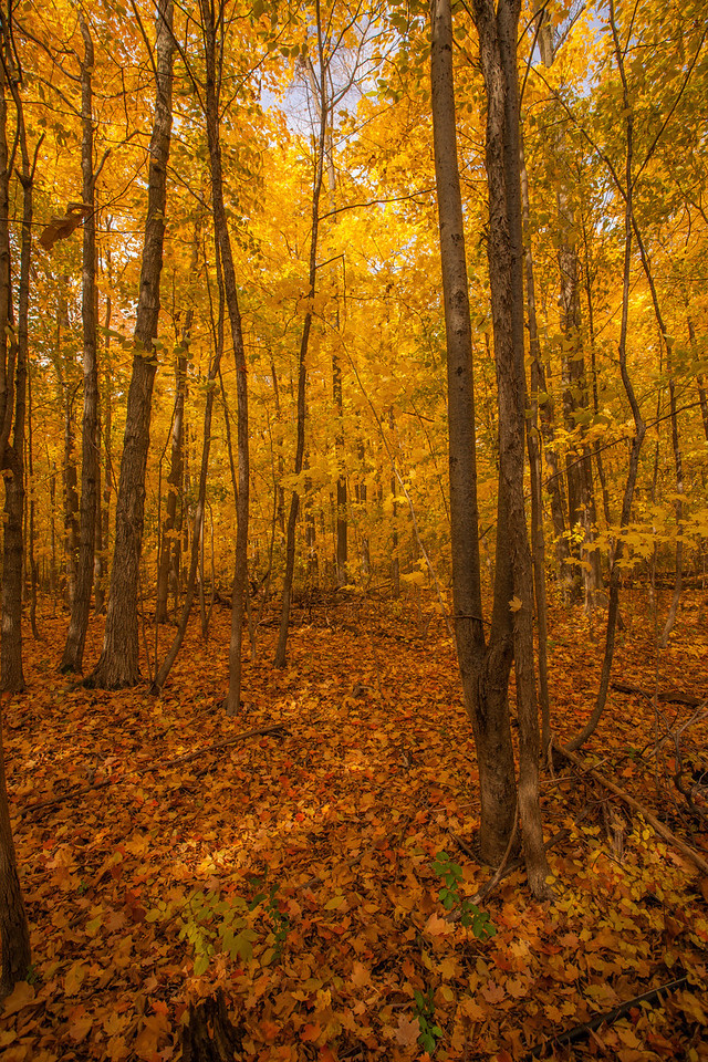 2012-10-18_Sagecrest_Pond_20