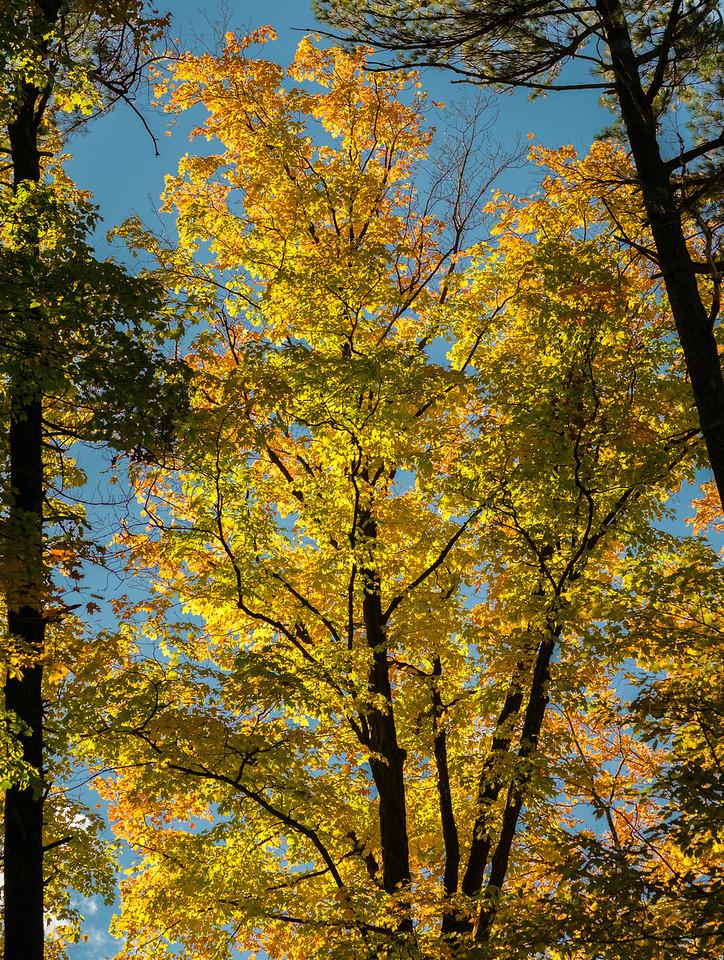 2012-10-12 - Thornhill Woods Park - 38