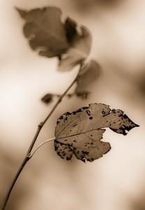 2012-11-11_Sagecrest_Pond_35