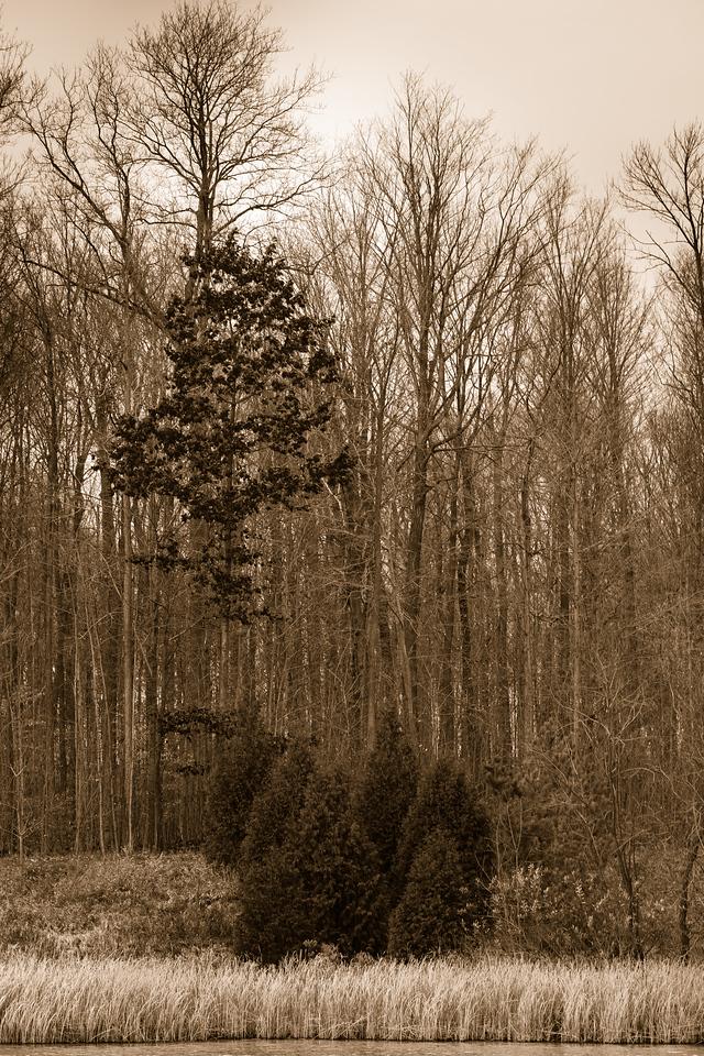 2012-11-11_Sagecrest_Pond_24