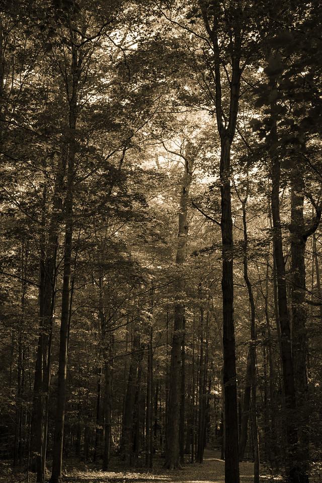 2012-10-12 - Thornhill Woods Park - 03
