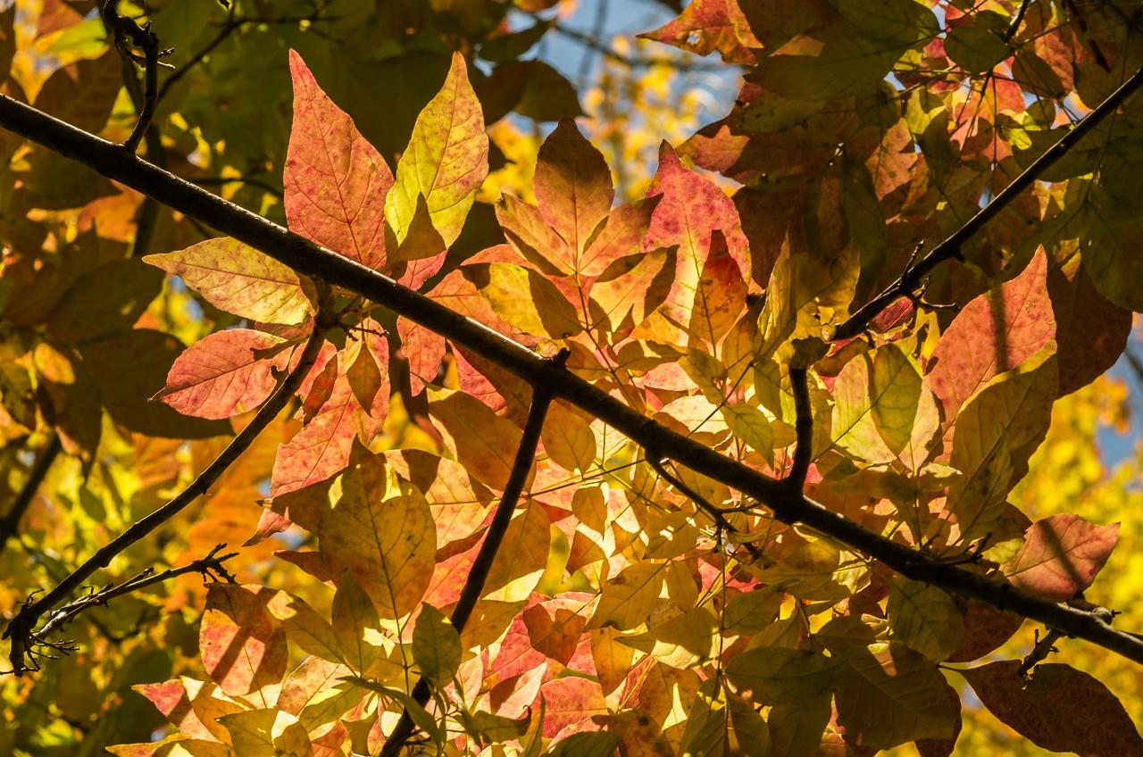 2012-10-12 - Thornhill Woods Park - 42