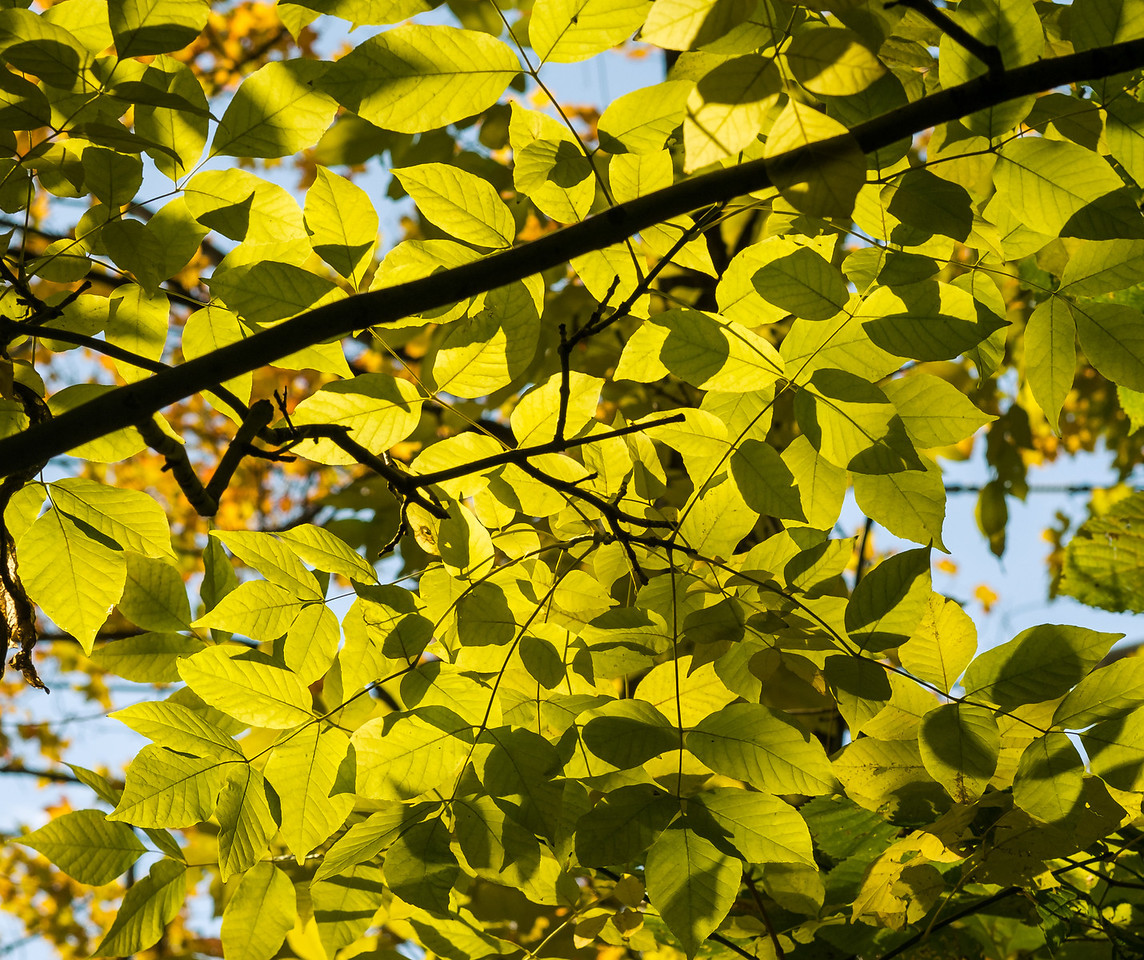 2012-10-12 - Thornhill Woods Park - 43