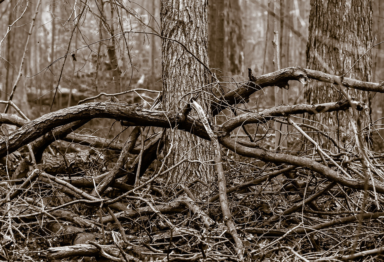 2012-11-20_Thornhill Woods_25