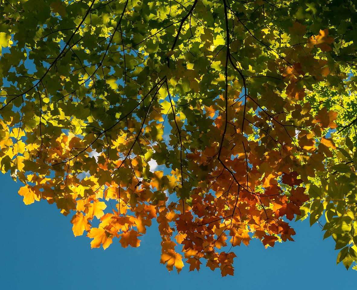 2012-10-12 - Thornhill Woods Park - 45