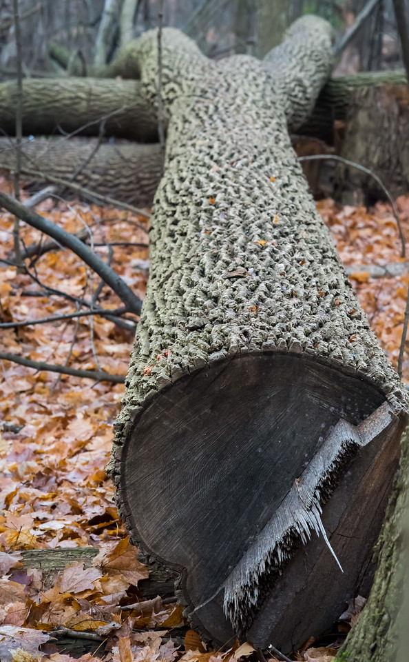 2012-11-20_Thornhill Woods_20