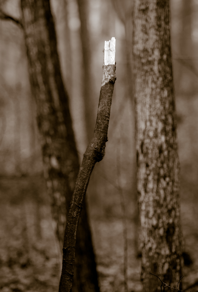 2012-11-20_Thornhill Woods_15