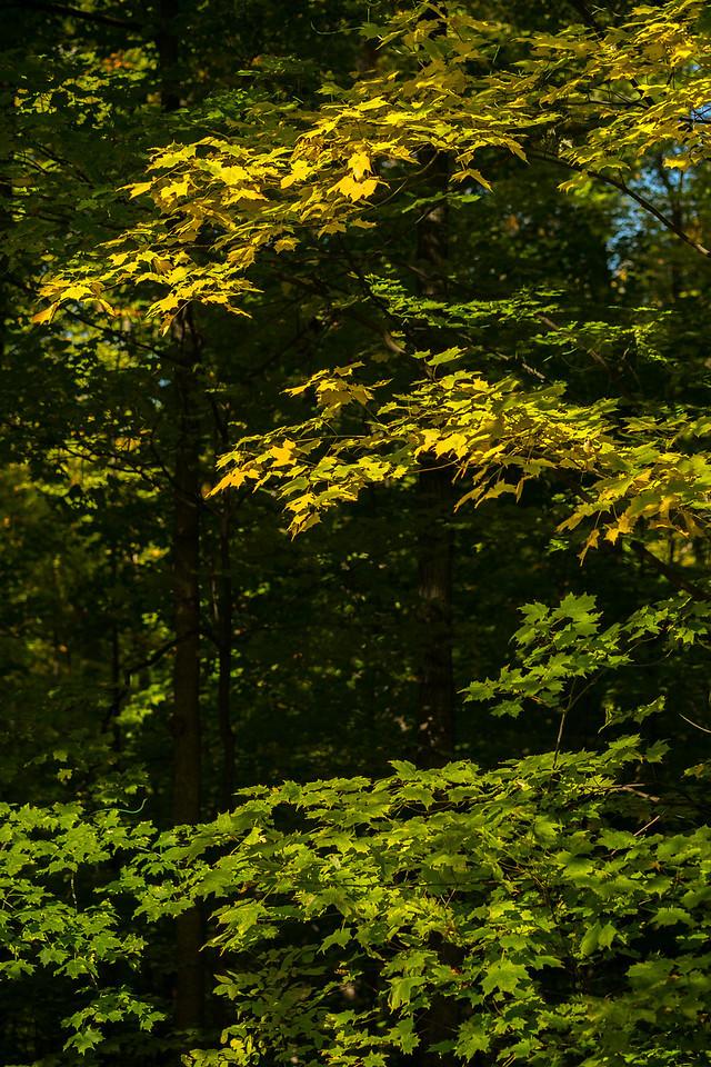 2012-10-12 - Thornhill Woods Park - 56