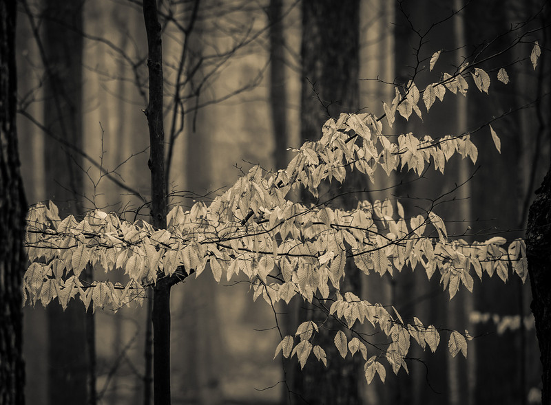 2012-03-21 - Thornhill Woods - 25