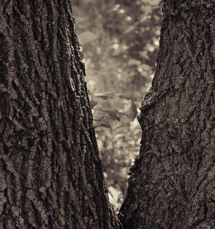 2012-05-11 - Pomona Park - 17