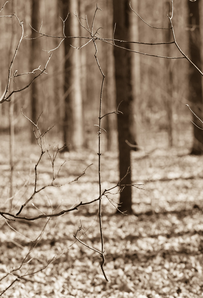 2012-03-24 - Thornhill Woods - 07
