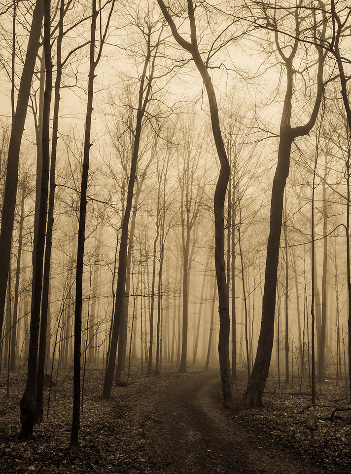 2012-03-21 - Thornhill Woods - 03