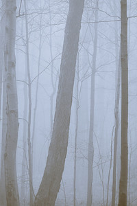 2012-03-21 - Thornhill Woods - 09