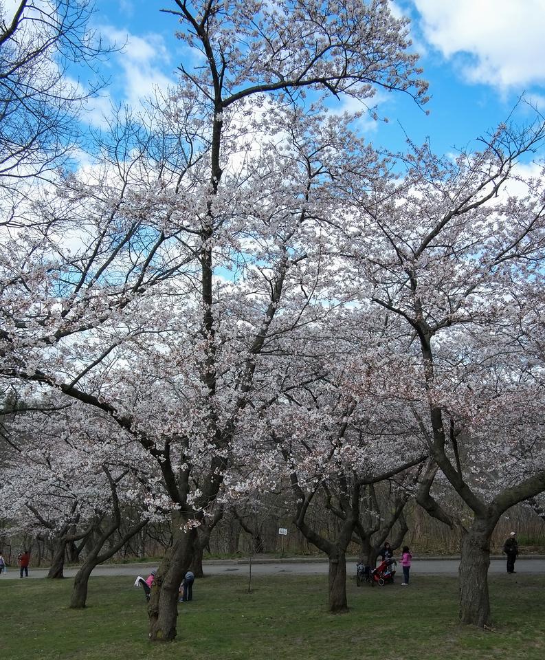 2012-04-12 - High Park - 01