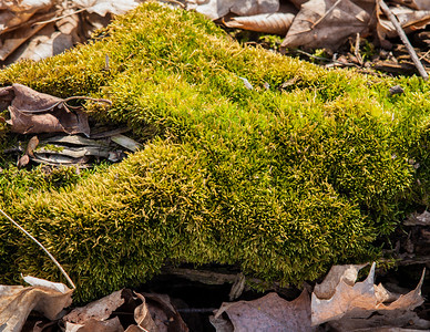 2012-03-24 - Thornhill Woods - 01