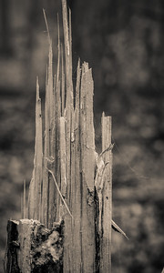 2012-03-21 - Thornhill Woods - 27
