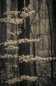 2012-03-21 - Thornhill Woods - 26