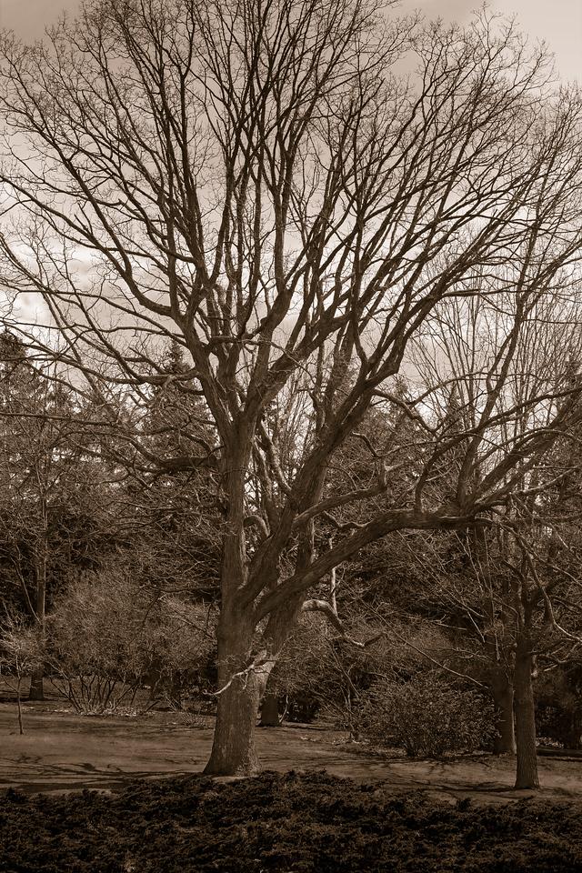 2012-04-12 - High Park - 13